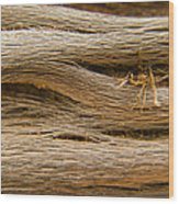Driftwood 1 Wood Print by Adam Romanowicz