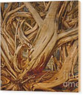 Driftwood Jungle Botany Bay Wood Print