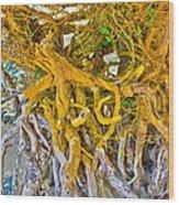 Queen Mariana's Driftwood Wood Print