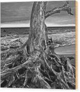 Driftwood On Jekyll Island Black And White Wood Print