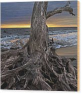 Driftwood On Jekyll Island Wood Print by Debra and Dave Vanderlaan