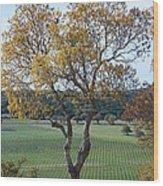 Driftwood Texas Wood Print