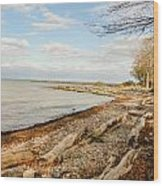 Driftwood On Shore Wood Print