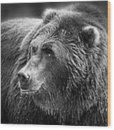 Drinking Grizzly Bear Black And White Wood Print