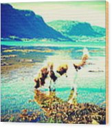 Springer Spaniel Drinking Water From The Big Blue Sea  Wood Print