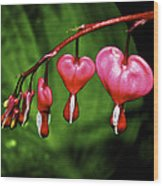 Drip Of The Heart Wood Print