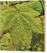 Dripping Vine Maple Wood Print