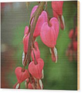 Dripping With Love Wood Print by Mary Machare
