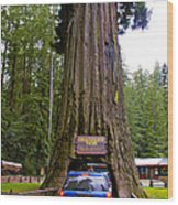 Drive Through Redwood Tree Wood Print