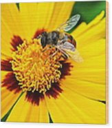 Drone Bee Wood Print