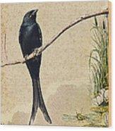 Drongo Wood Print