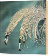 Droopy Feather Wood Print