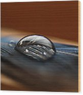 Drop On A Bluejay Feather Wood Print
