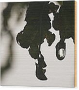 Droplet Wood Print