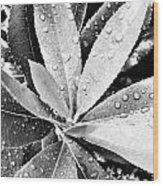 Droplets Wood Print