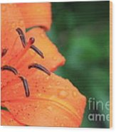 Droplets On Tiger Lily Wood Print