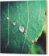 Drops Of Joy Wood Print