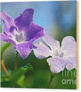 Drops On Violets Wood Print by Carlos Caetano