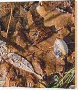 Dry Acorn And Oak Leaves Wood Print