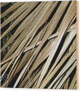 Dry Palm Leaves Wood Print