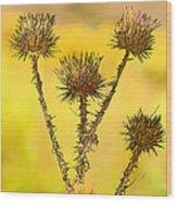 Dry Brown Thistle Wood Print