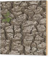 Dry Cracked Mud  Wood Print