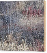 Dry Grasses And Bare Trees Wood Print by Elena Elisseeva
