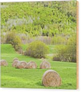 Dry Hay Bales In Spring Farm Field Maine Wood Print
