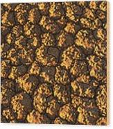 Dry Lakebed, Nevada Wood Print