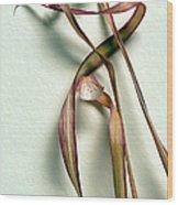 Dry Leaves Detail Long Wood Print