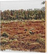 Dry Swamp Wood Print