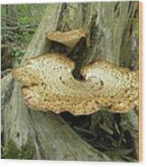 Dryads Saddle Bracket Fungi - Polyporus Squamosus Wood Print