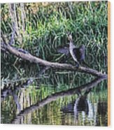 drying cormorant- Black bird sitting on log over water Wood Print