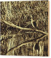 drying cormorant BW- Black bird sitting on log over water Wood Print