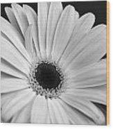 Dsc0056d1-001 Wood Print