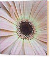 Dsc0059d1 Wood Print