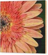 Dsc1484z-001 Wood Print
