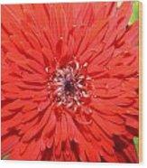 Dsc1516z-006 Wood Print