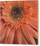 Dsc261d2-004 Wood Print