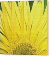 Dsc301d-002 Wood Print