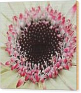 Dsc310d-004 Wood Print