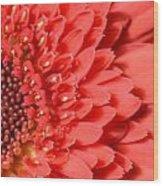 Dsc359d-001 Wood Print