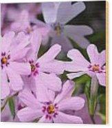 Dsc379d-003 Wood Print