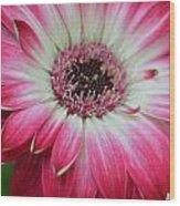 Dsc413-001 Wood Print