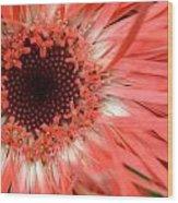 Dsc421d-001 Wood Print