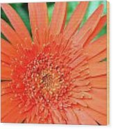 Dsc451d Wood Print