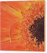 Dsc530-001 Wood Print