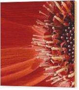 Dsc709d-002 Wood Print