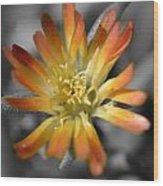 Dsc798d-001 Wood Print