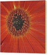 Dsc883d-001 Wood Print
